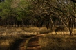 Landscape of Ranthambore National Park